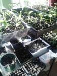 Starter plants for 2014 garden