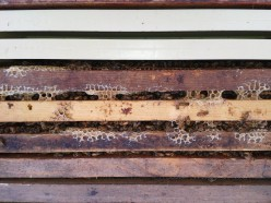 Nuc frames in new hive