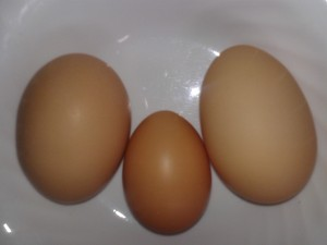 """Our """"Ginormous"""" Eggs compared to a large"""
