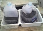 Mini greenhouse milkjug