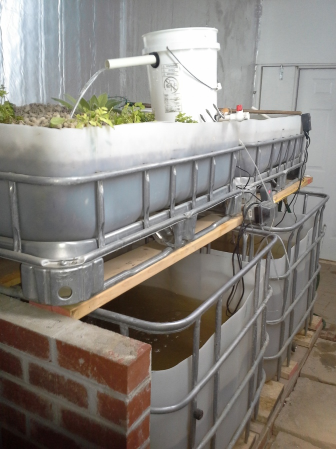 OK, I give up! Aquaponics Education