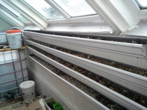 Gutter Garden added to aquaponics tank. Gutters filled with bio-media to support plants  and fish growth.