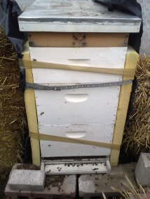 Close hive with feeder