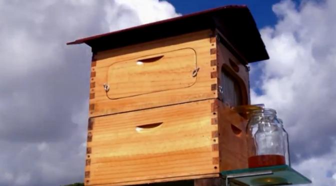 Beekeeper's Dream-Update