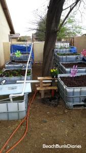 Planting our Garden (Aquaponics)