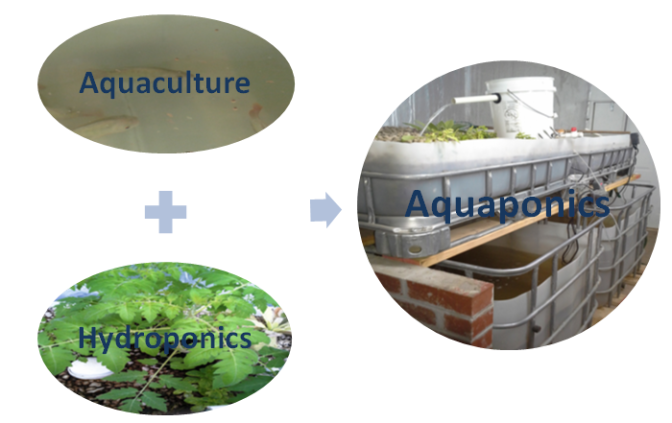 Aquaponic Basics Classes September 12, 2015