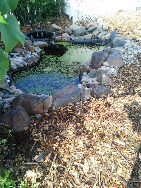 Water pond for my bees