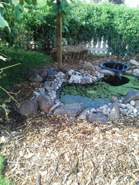 Fishless pond