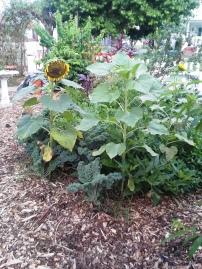 garden 009