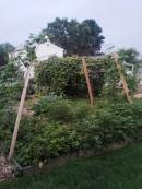 garden 012