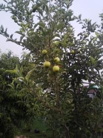 garden 014