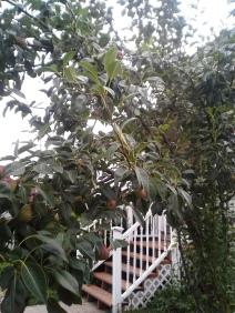 garden 015