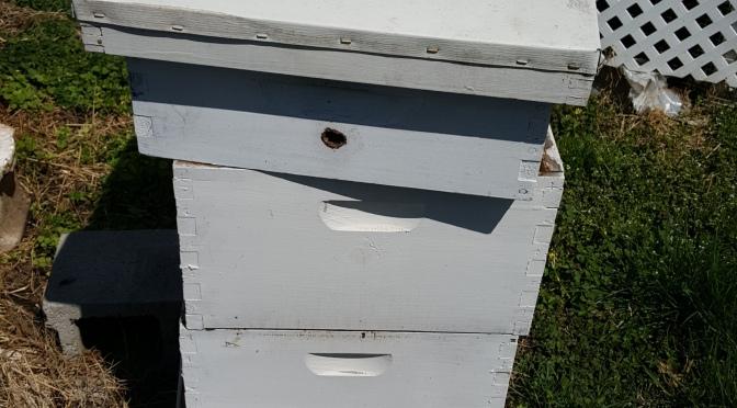 Bee-utiful Morning