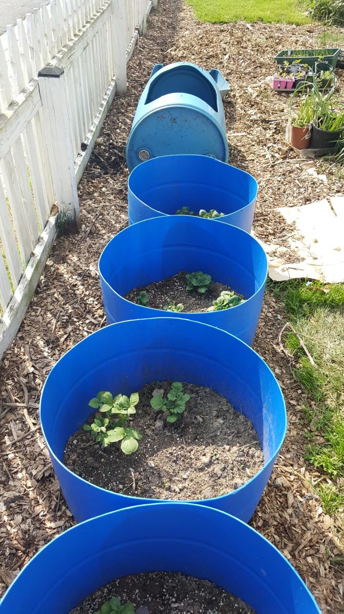 Project expansion-Barrel Garden & Aquaponics